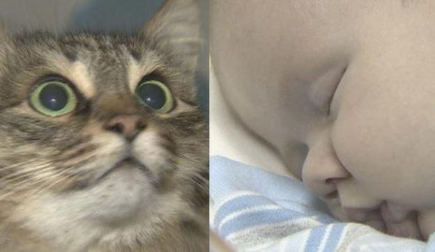 Gato Salva Um Bebê Abandonado De Morrer De Frio